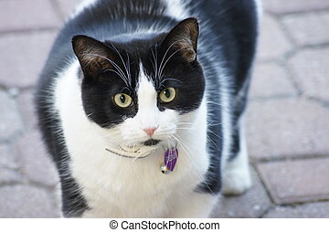 Green Eyed Cat - Black and white cat with green eyes.