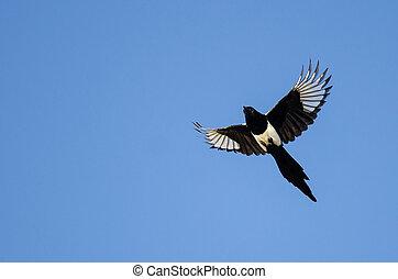 azul,  black-billed, vuelo, cielo, urraca