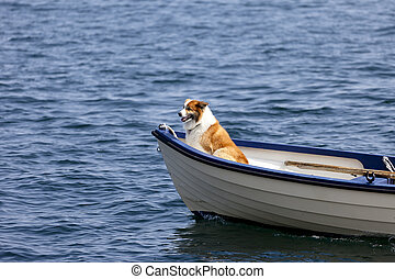 Riding a Boat - Dog in the front of a small boat