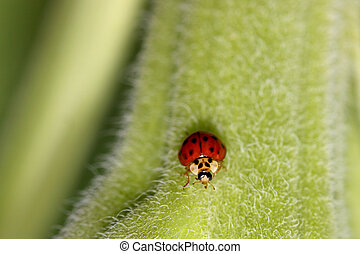 Lady bug - Extreme close up shot of Lady bug on a leaf