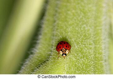 Lady bug - Extreme close up shot of Lady bug on a leaf