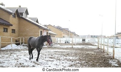 Black horse in the stable at winter day
