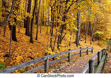 Autumn landscape - Board walk and bridge through beautiful...