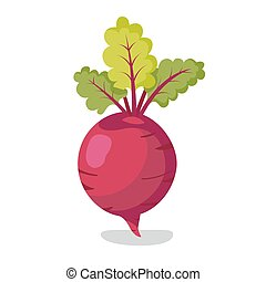 Fresh beet with leaf. Vector illustration. Isolated white...
