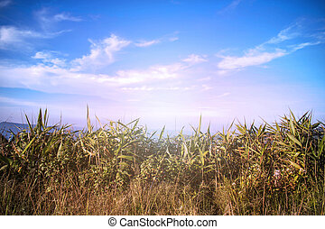 grass on the mountain