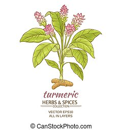 turmeric  plant illustration