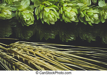 Green hop cones and ears of wheat. Blue toned - Green hop...