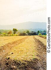 Plowed field farmland tillage for farming with soft warm...