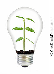 Plant in a bulb