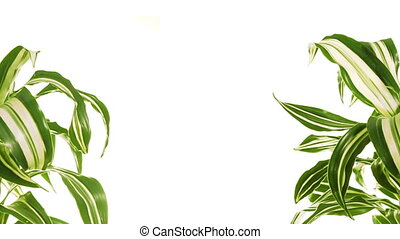 Two rotating plants with copy space between them. Isolated...