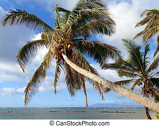 Coconut Tree hangs over Fish Pond with Gentle Waves break...