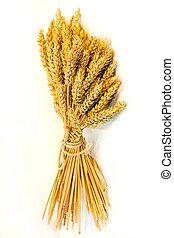 Wheat beam - Close up shot of fresh wheat beam