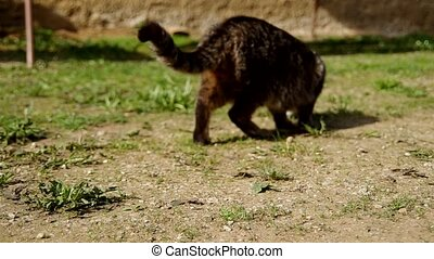 Cat in the yard - Cat walks around the yard and look for...