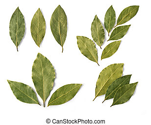 Dried bay leaves isolated