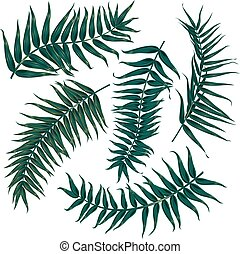 set of tropical leaves on white background, 5 different versions of palm branches