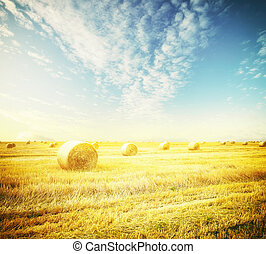 Field - hay-roll on meadow against sunset background