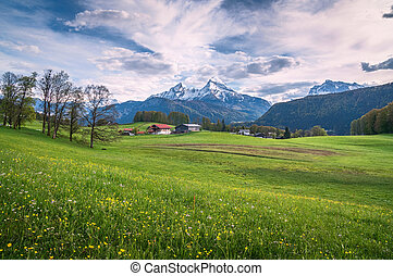 Idyllic alpine landscape with green meadows, farmhouses and snow-covered mountains