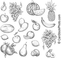 Fruits vector sketch isolated icons - Fruits sketch. Vector...