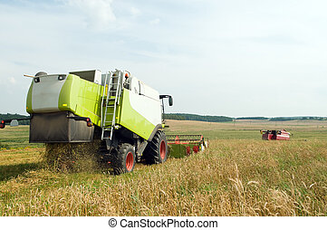 Two working harvesting combines