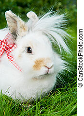 white rabbit on green grass - White pretty show rabbit on...