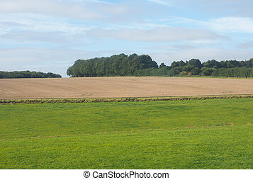 English country panorama in Salisbury - English country...