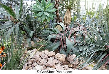 Rainforest in botanical garden - Assortment of tropical...