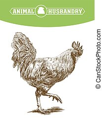 chicken breeding. animal husbandry. livestock. vector sketch...