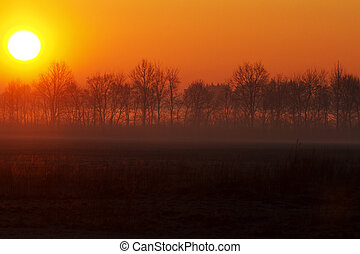 forest separating fields and beautiful sunrise