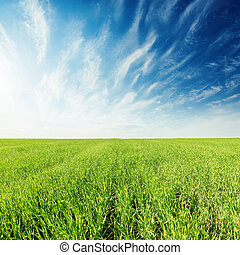 green grass field and deep blue sky with clouds