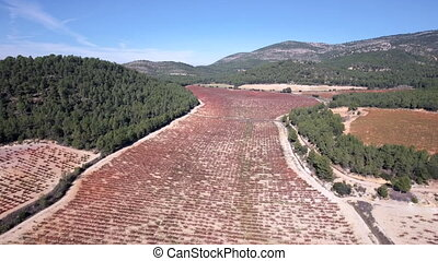 Flying over vineyard rows in autumn - Aerial view over...
