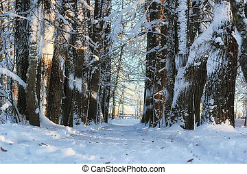winter forest landscape sunlight snow - various objects of...