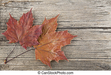 autumn leaves on wooden background closeup