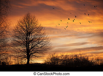 Tree in sunset time with birds - Tree in sunset time with...