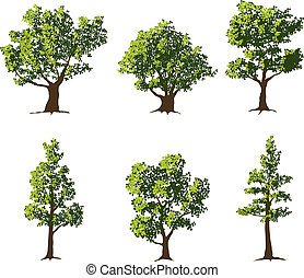 Trees - Collection of six fully grown shade trees.
