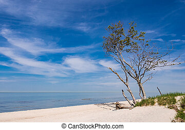 Tree on shore of the Baltic Sea.