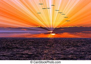 Sunset Ocean Birds - Sunset ocean birds is a flock of...
