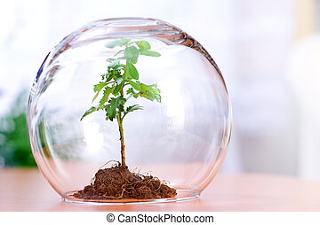 Protecting a plant - Protected green plant inside a glass...