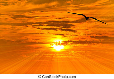 Bird Freedom Silhouette Flying - Bird freedom silhouette...