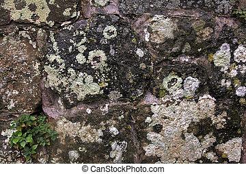 Lichen on old stone - Natural background texture with lichen...