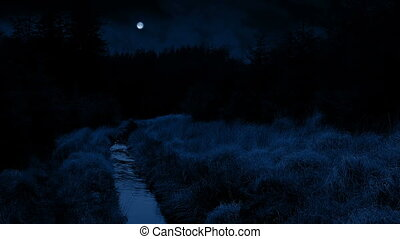 Stream Through The Woods At Night