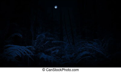 Moving Through Forest With Moon At Night - Dolly shot moving...