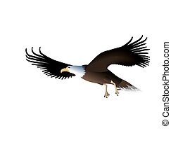 Flying Eagle Isolated on White Background - Illustration...