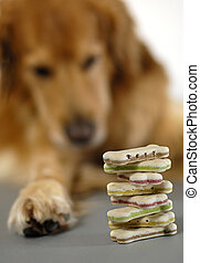 Dog cookies - Dog is watching a pile of dog cookies