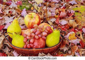 夏, 有機体である, 自然, 西洋ナシ, 草, フルーツ, りんご, バスケット, 新たに, ブドウ