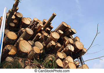 Energy Wood by the Truck Load