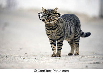 Stray cat looking at camera. - Stray cat with glasses...
