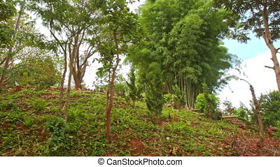 Forestry Hill with Long Stone Stairs in Buddhist Temple...