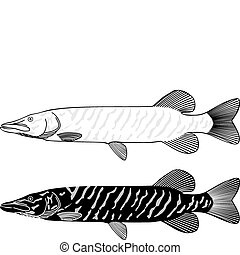 Pike - Black and white vector illustration of a pike