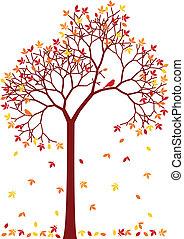 barwny, jesień, drzewo