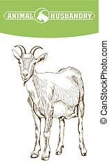 sketch of goat drawn by hand. livestock. animal grazing -...